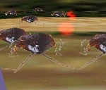 恐怖ゴキブリ1000匹